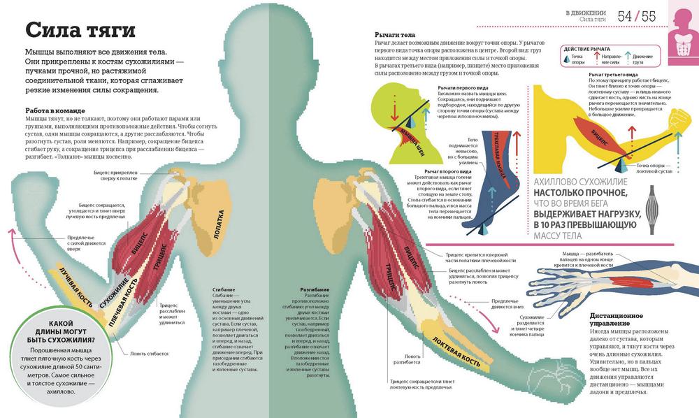 Книга «Как работает тело»