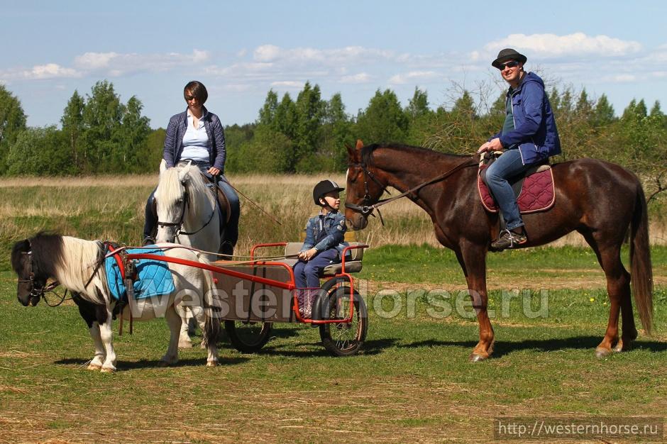 катание на лошадях в Петербурге