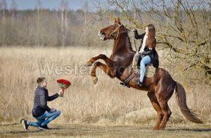 Работает! Конный клуб «Western Horse»: катание на лошадях в Петербурге