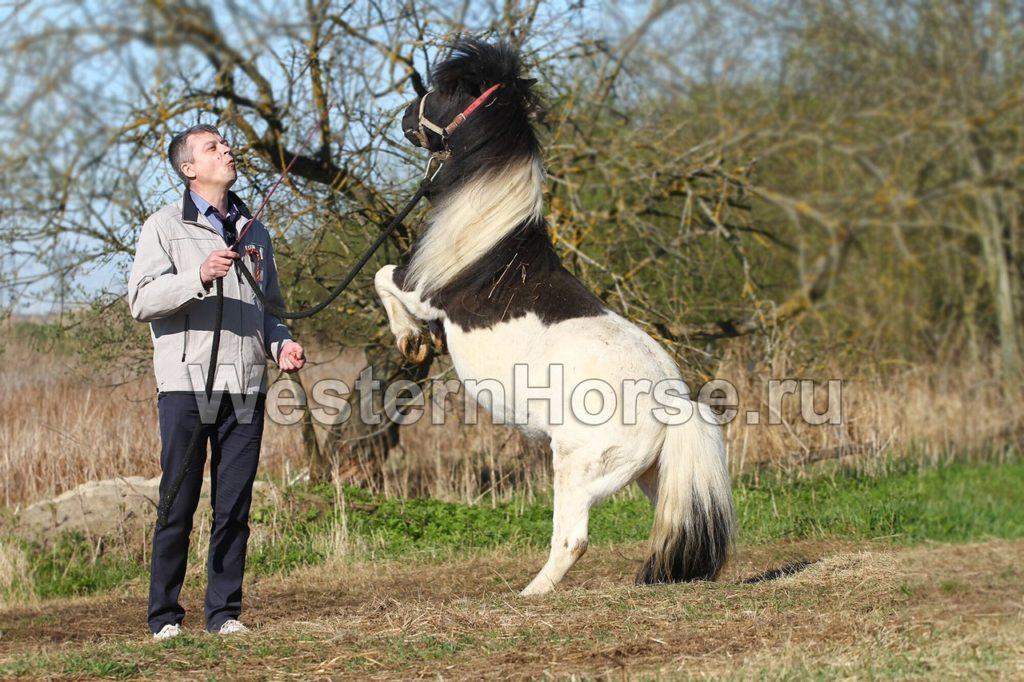 """Конный клуб """"Western Horse"""": катание на лошадях в Петербурге"""