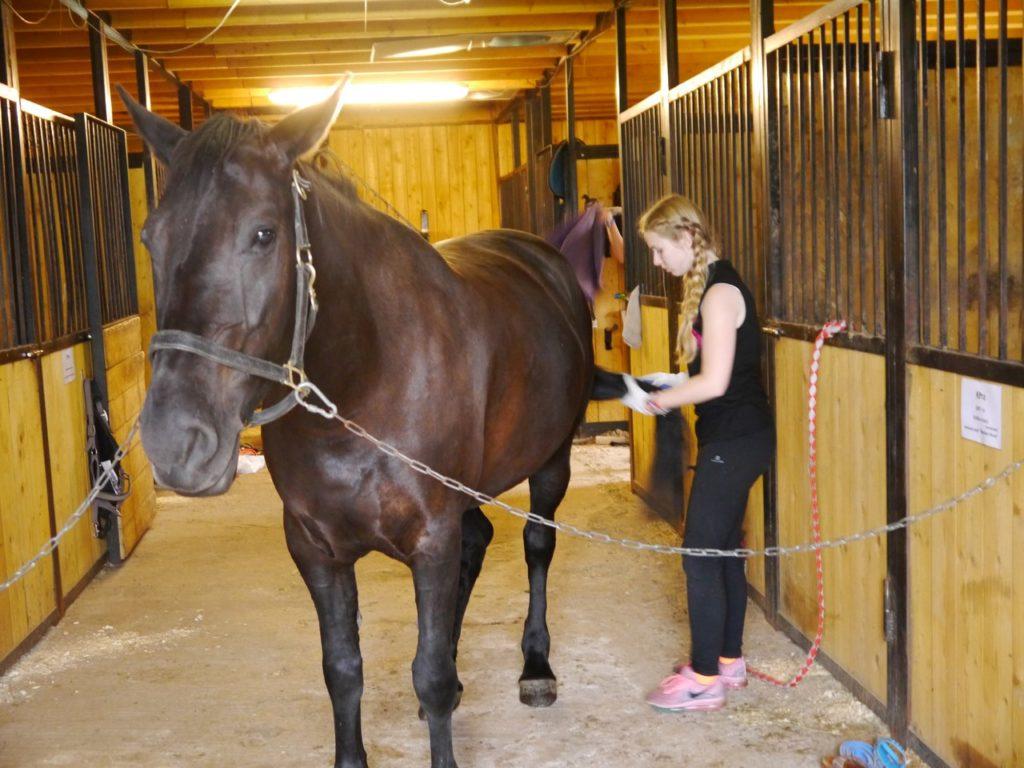 Катание на лошадях в Петербурге летом где конные прогулки