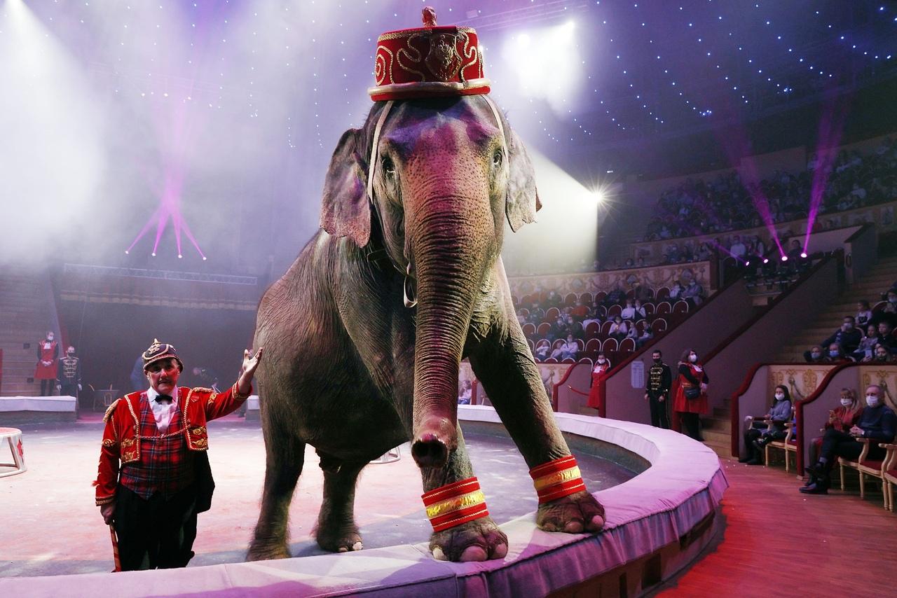 Итальянский цирк Togni в Цирке на Фонтанке